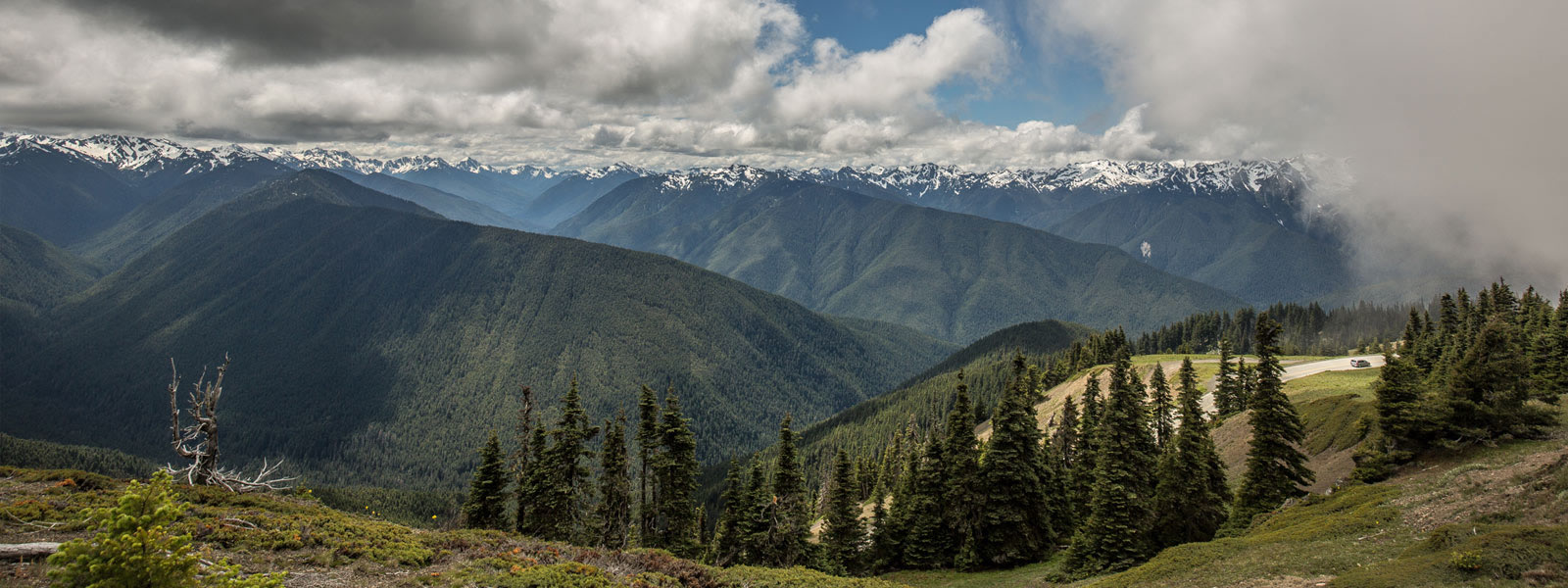 hurricane ridge olympic national park