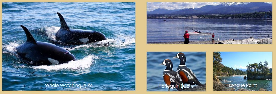 whales, birds, beaches on the Olympic Peninsula Washington State