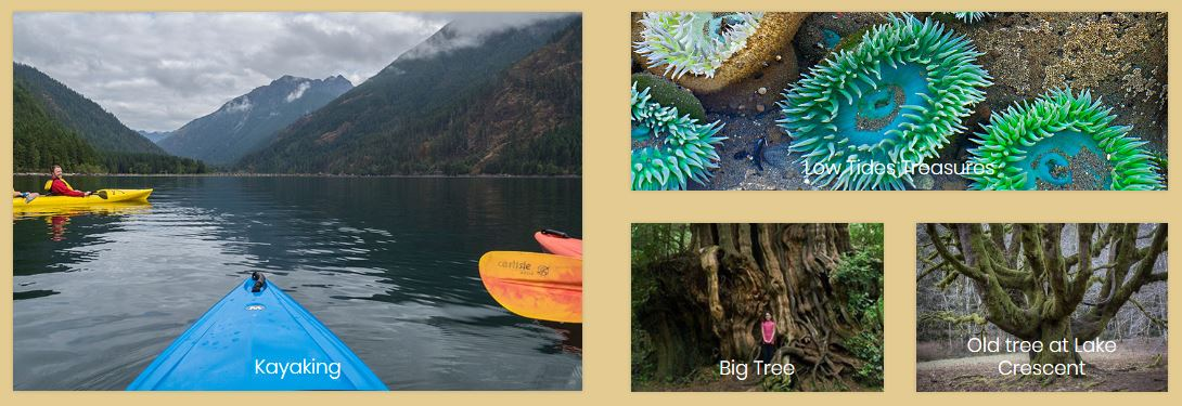 things to do on the olympic peninsula and olympic national park washington